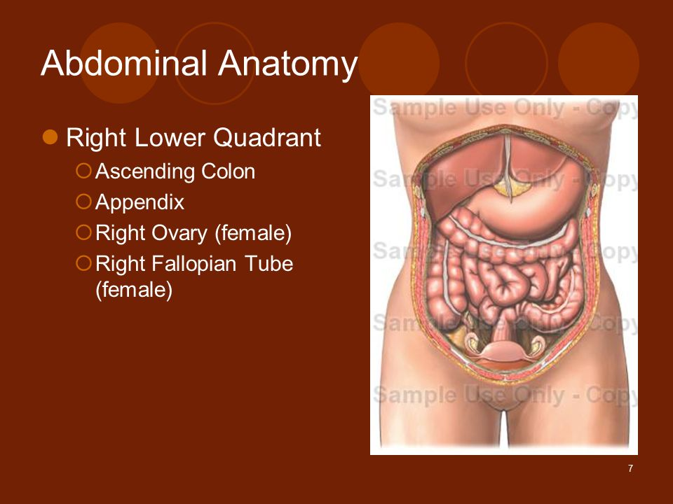1 Abdominal Pain Amy Little Md Albany Medical Center Ppt Download