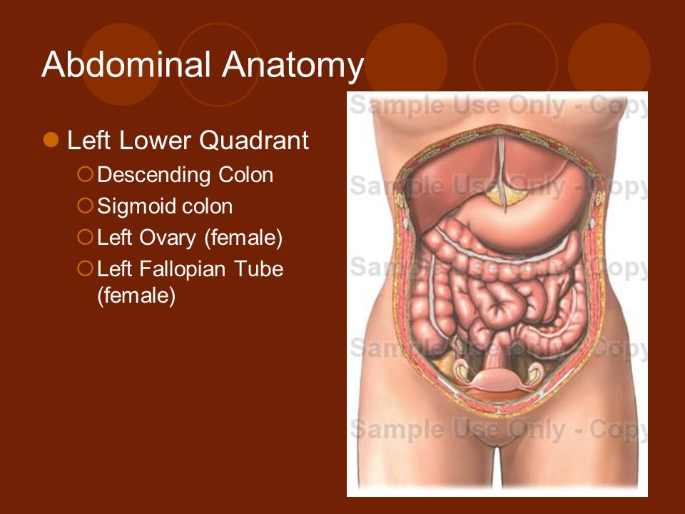 1 Abdominal Pain AMY LITTLE, MD ALBANY MEDICAL CENTER. - ppt download