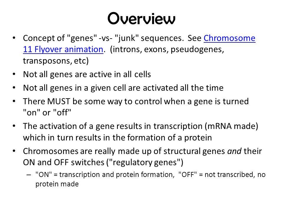 supplementary genes