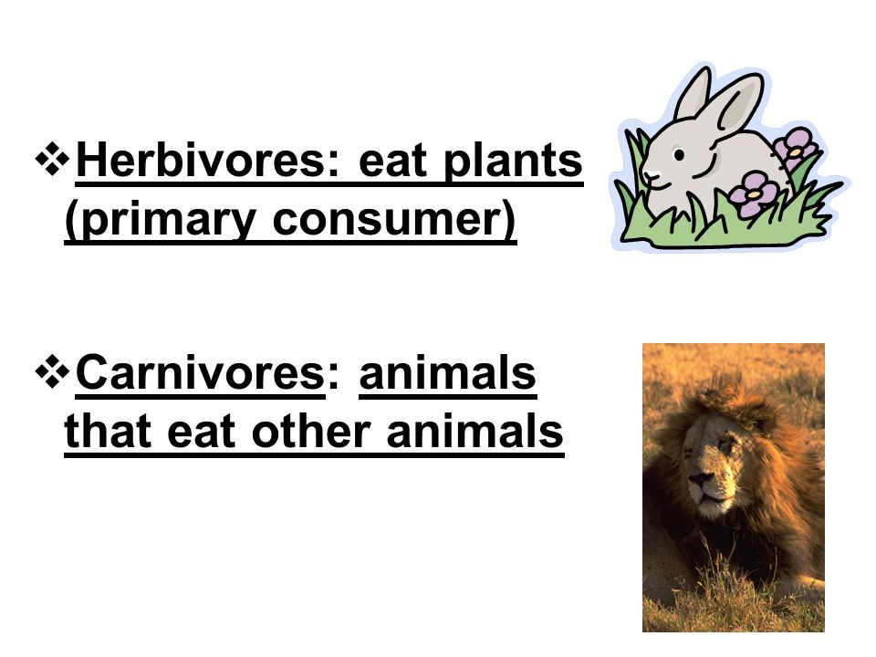  Herbivores: eat plants (primary consumer)  Carnivores: animals that eat other animals