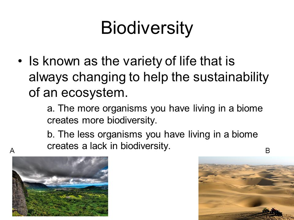 Biodiversity Is known as the variety of life that is always changing to help the sustainability of an ecosystem.