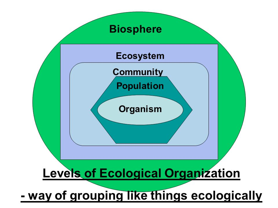 Biosphere Ecosystem Community Population Organism Levels of Ecological Organization - way of grouping like things ecologically