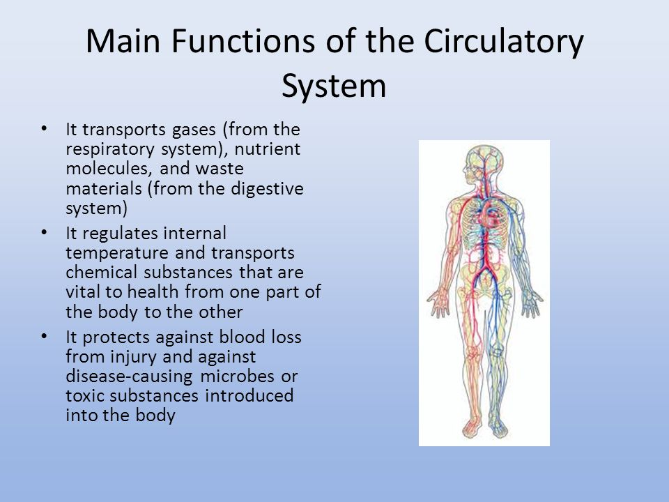 Unit 4 Animal Structure And Function The Digestive System Ppt