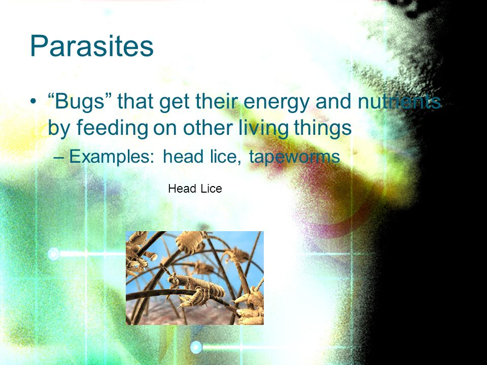 Parasites Bugs that get their energy and nutrients by feeding on other living things –Examples: head lice, tapeworms Head Lice