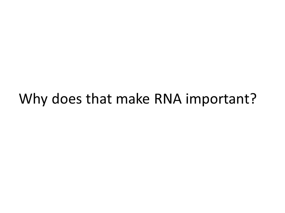 Why does that make RNA important