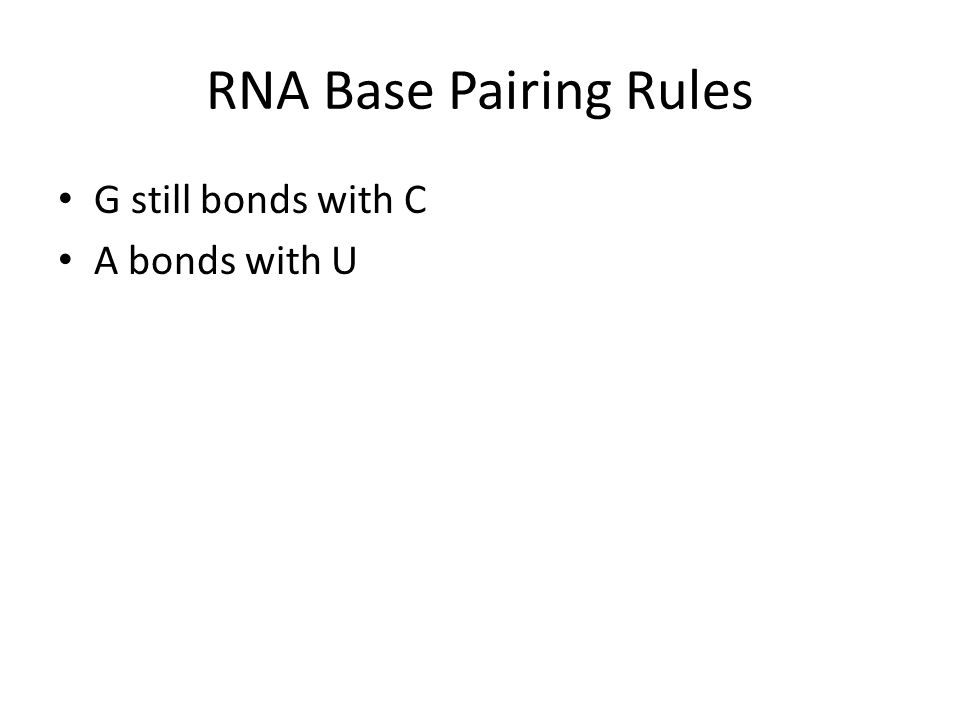 RNA Base Pairing Rules G still bonds with C A bonds with U