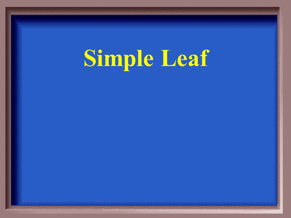 What term describes a leaf that has a single blade
