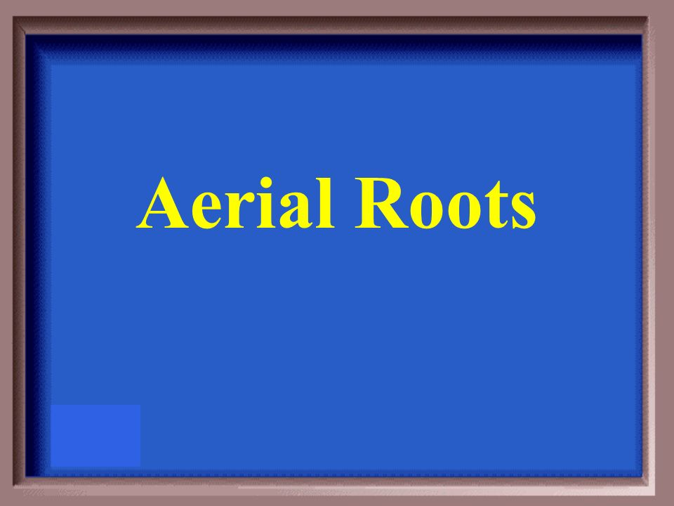 Roots that cling to walls and objects for support are called