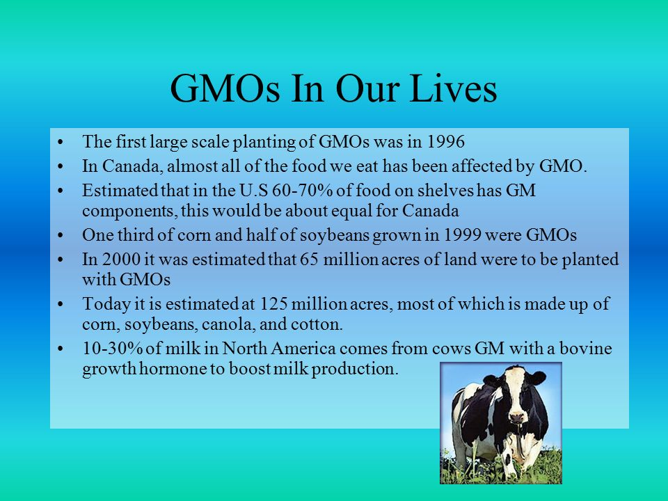 GMOs In Our Lives The first large scale planting of GMOs was in 1996 In Canada, almost all of the food we eat has been affected by GMO.