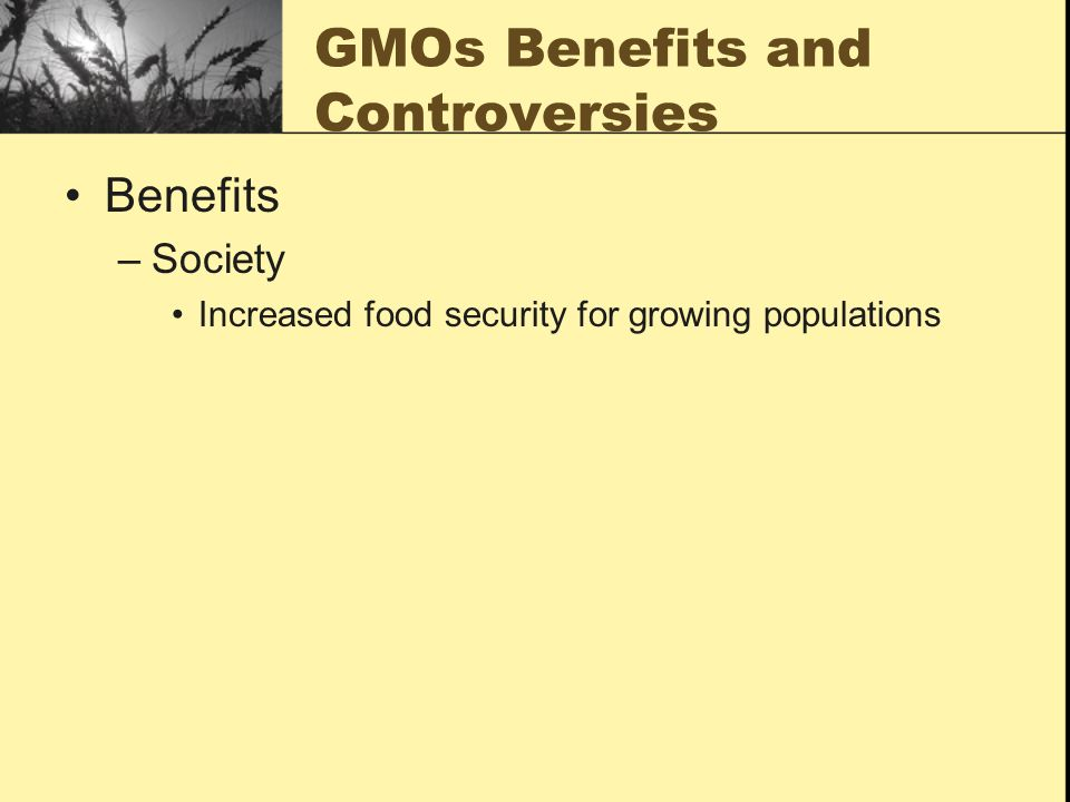 GMOs Benefits and Controversies Benefits –Society Increased food security for growing populations
