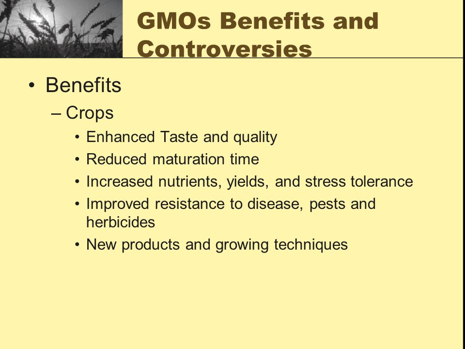 GMOs Benefits and Controversies Benefits –Crops Enhanced Taste and quality Reduced maturation time Increased nutrients, yields, and stress tolerance Improved resistance to disease, pests and herbicides New products and growing techniques