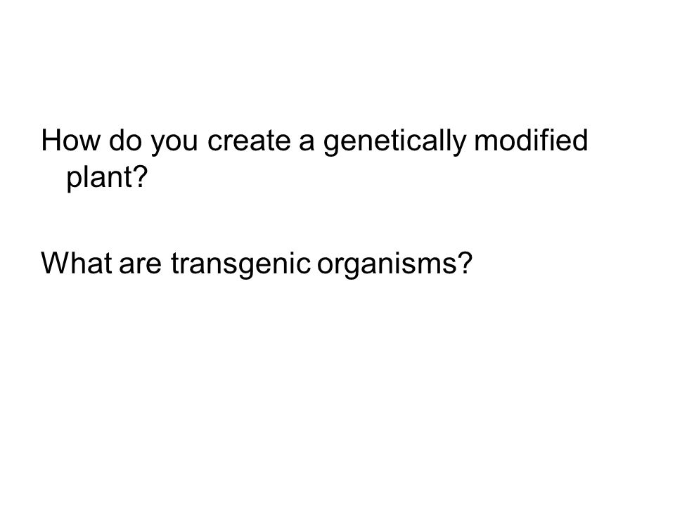 How do you create a genetically modified plant What are transgenic organisms