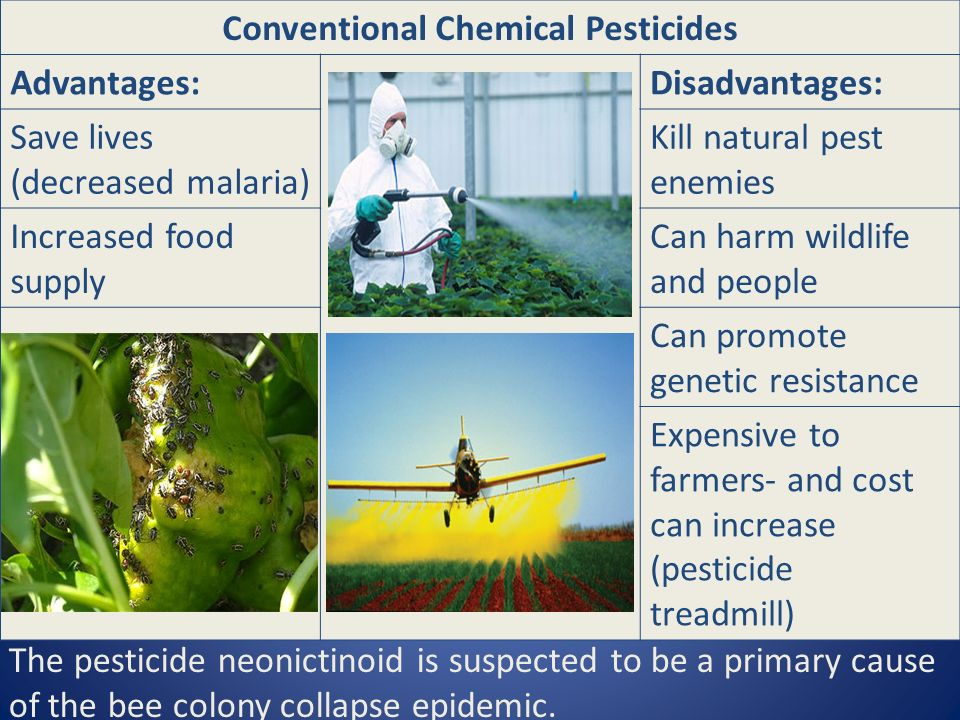 Conventional Chemical Pesticides Advantages:Disadvantages: Save lives (decreased malaria) Kill natural pest enemies Increased food supply Can harm wildlife and people Can promote genetic resistance Expensive to farmers- and cost can increase (pesticide treadmill) The pesticide neonictinoid is suspected to be a primary cause of the bee colony collapse epidemic.