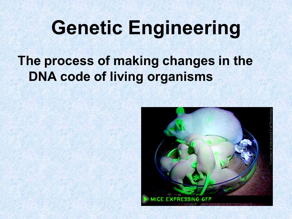 Genetic Engineering The process of making changes in the DNA code of living organisms