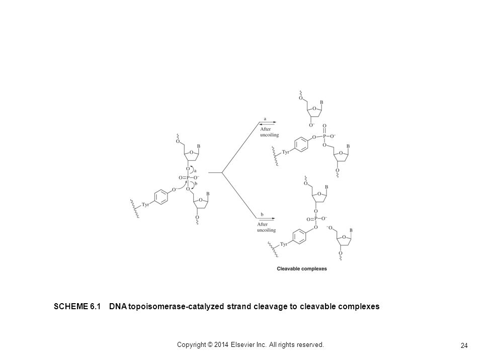 1 Chapter 06 Dna Interactive Agents 2 Copyright 2014 Elsevier Inc