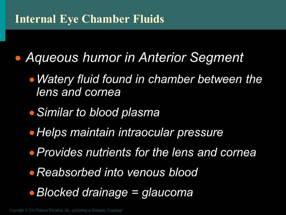 Copyright © 2004 Pearson Education, Inc., publishing as Benjamin Cummings Internal Eye Chamber Fluids  Aqueous humor in Anterior Segment  Watery fluid found in chamber between the lens and cornea  Similar to blood plasma  Helps maintain intraocular pressure  Provides nutrients for the lens and cornea  Reabsorbed into venous blood  Blocked drainage = glaucoma