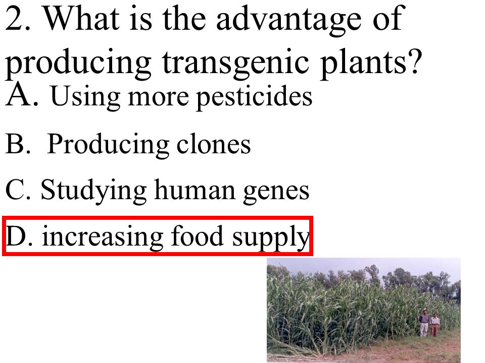 2. What is the advantage of producing transgenic plants.