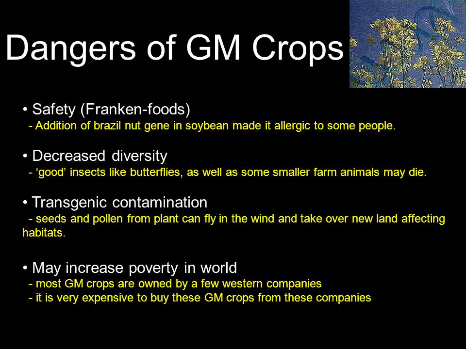 Dangers of GM Crops Safety (Franken-foods) - Addition of brazil nut gene in soybean made it allergic to some people.
