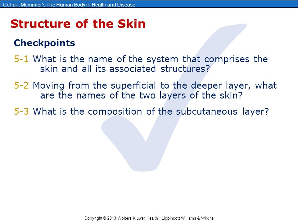 Copyright © 2013 Wolters Kluwer Health | Lippincott Williams & Wilkins Cohen: Memmler's The Human Body in Health and Disease Structure of the Skin ✓ Checkpoints 5-1 What is the name of the system that comprises the skin and all its associated structures.