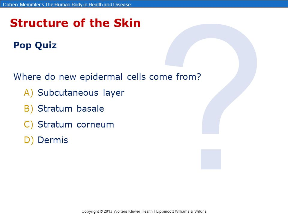 Copyright © 2013 Wolters Kluwer Health | Lippincott Williams & Wilkins Cohen: Memmler's The Human Body in Health and Disease Structure of the Skin Pop Quiz Where do new epidermal cells come from.