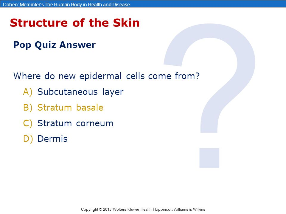 Copyright © 2013 Wolters Kluwer Health | Lippincott Williams & Wilkins Cohen: Memmler's The Human Body in Health and Disease Structure of the Skin Pop Quiz Answer Where do new epidermal cells come from.