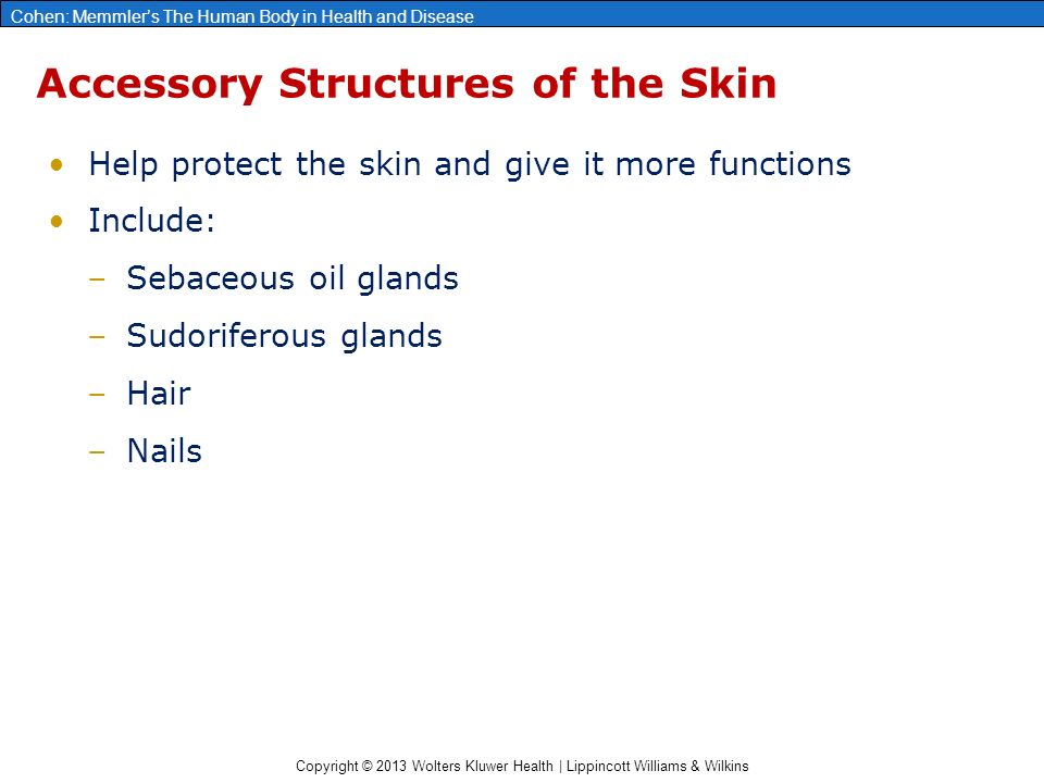 Copyright © 2013 Wolters Kluwer Health | Lippincott Williams & Wilkins Cohen: Memmler's The Human Body in Health and Disease Accessory Structures of the Skin Help protect the skin and give it more functions Include: –Sebaceous oil glands –Sudoriferous glands –Hair –Nails