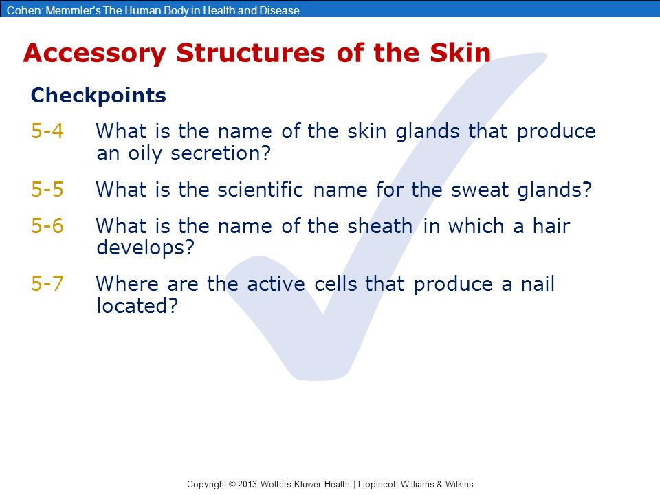 Copyright © 2013 Wolters Kluwer Health | Lippincott Williams & Wilkins Cohen: Memmler's The Human Body in Health and Disease Accessory Structures of the Skin ✓ Checkpoints 5-4What is the name of the skin glands that produce an oily secretion.