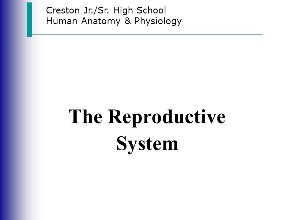 Creston Jrsr High School Human Anatomy Physiology The
