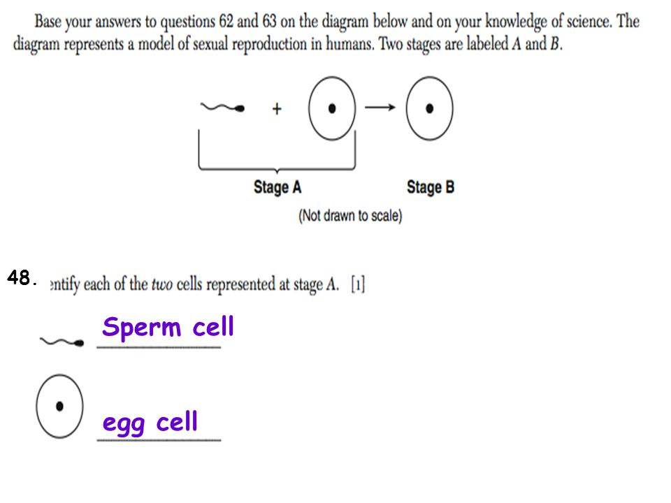 Reproduction development review 2 sperm cell male they come from 10 sperm cell egg cell 48 ccuart Choice Image