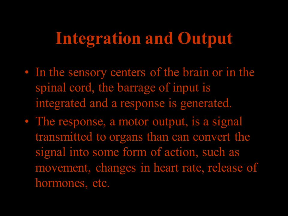 Integration and Output In the sensory centers of the brain or in the spinal cord, the barrage of input is integrated and a response is generated.