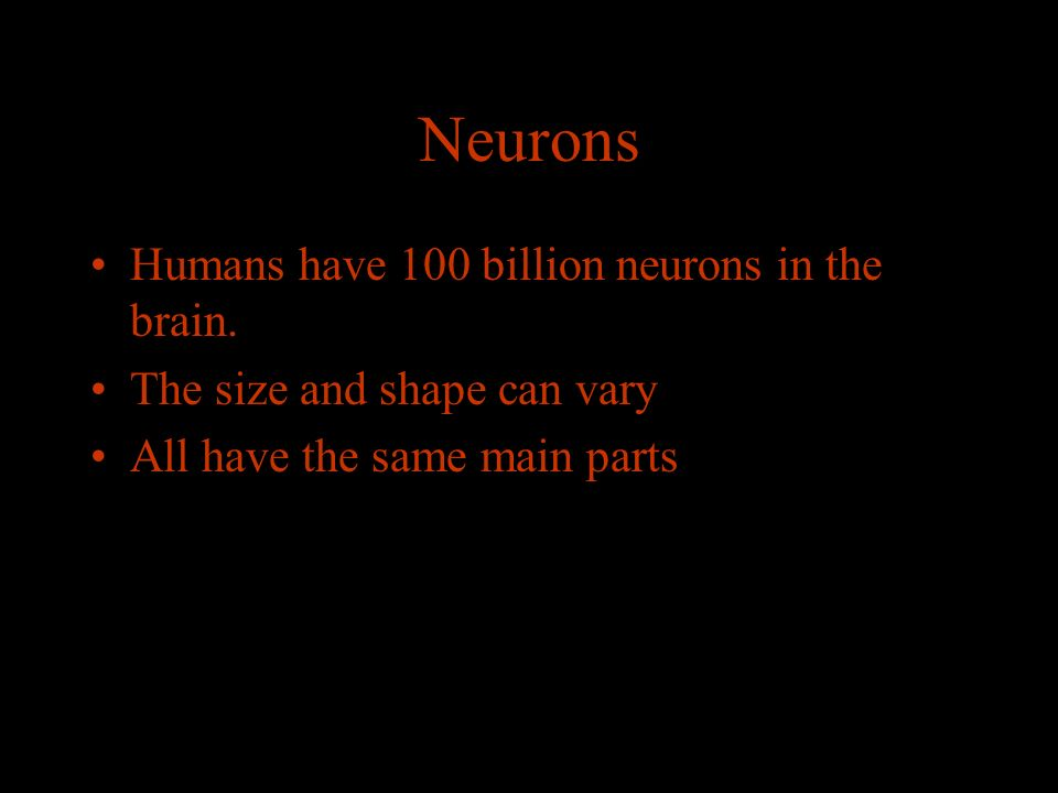 Neurons Humans have 100 billion neurons in the brain.
