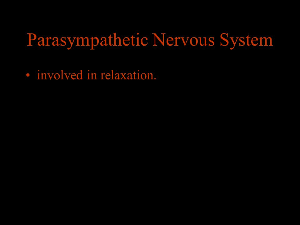 Parasympathetic Nervous System involved in relaxation.