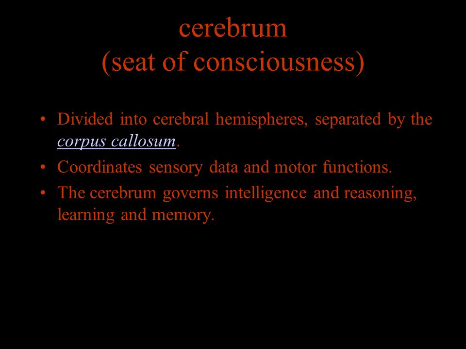 cerebrum (seat of consciousness) Divided into cerebral hemispheres, separated by the corpus callosum.