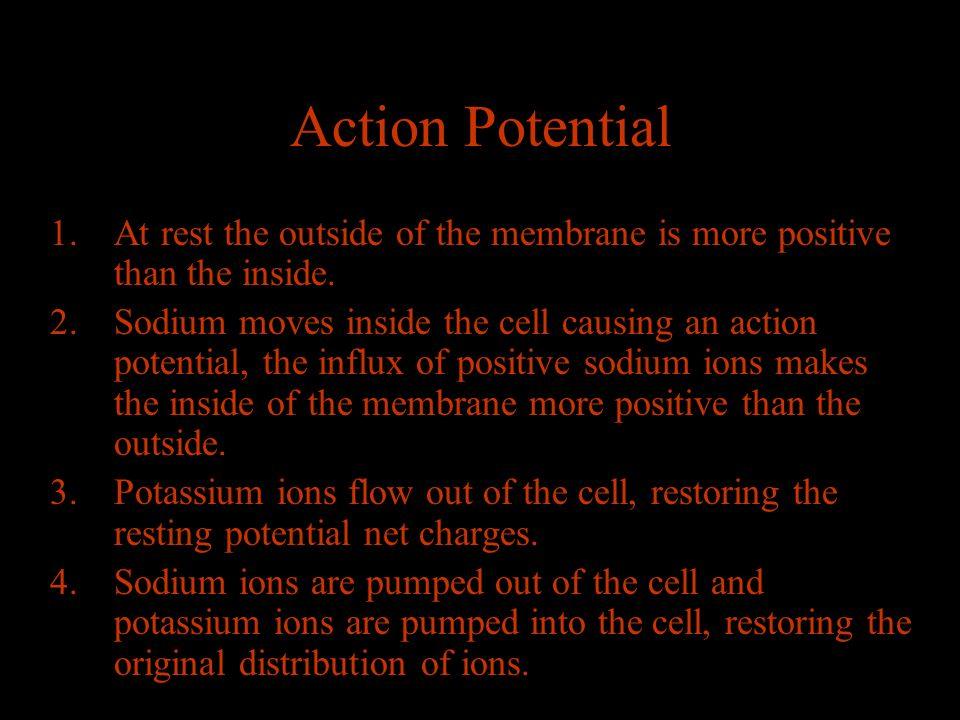 Action Potential 1.At rest the outside of the membrane is more positive than the inside.