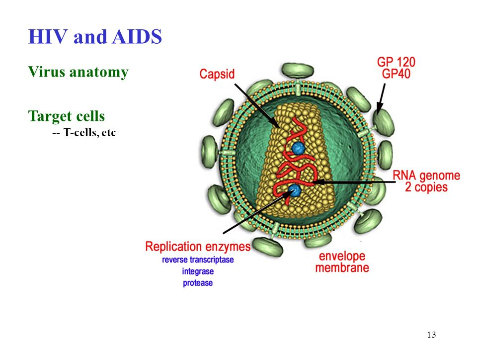 1 Virology Chapter 13 Not Responsible For Details Of Protein