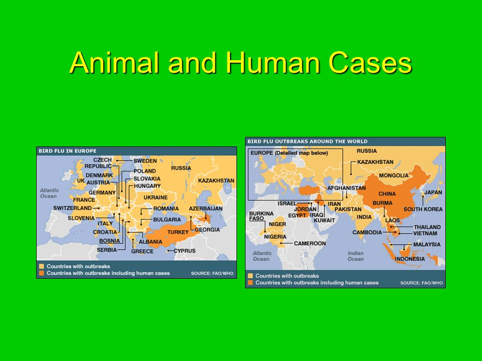 Animal and Human Cases
