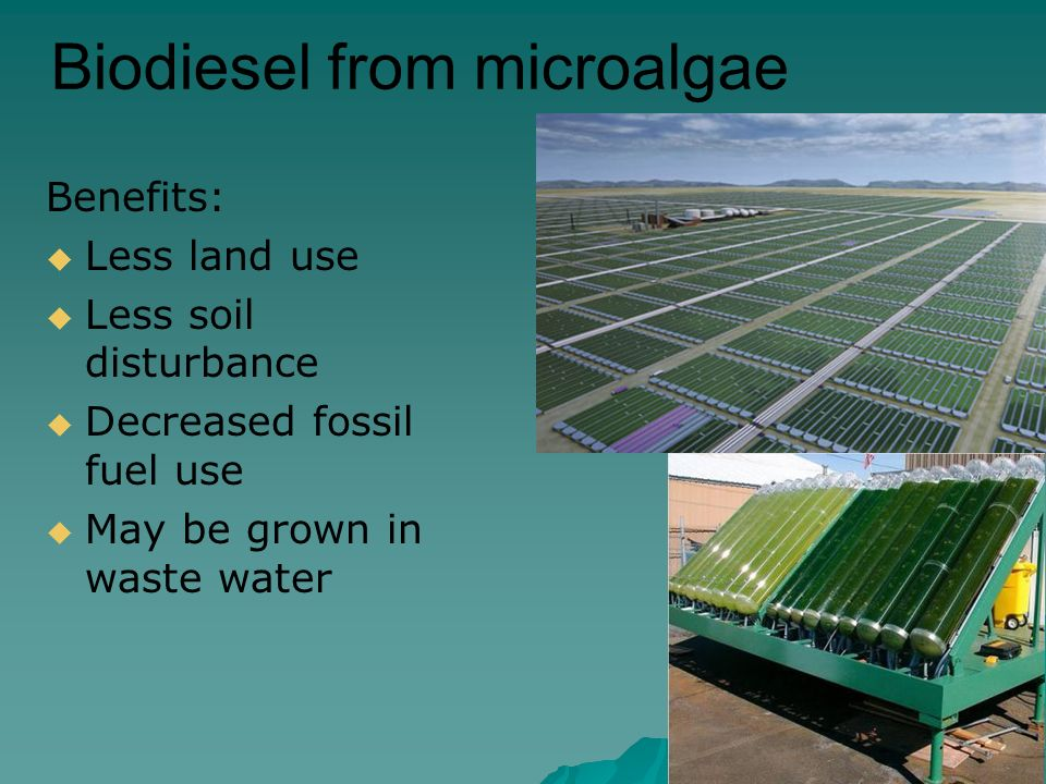 Biodiesel from microalgae Benefits:  Less land use  Less soil disturbance  Decreased fossil fuel use  May be grown in waste water