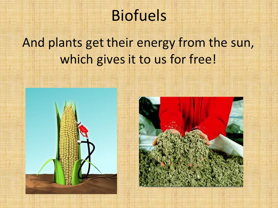 Biofuels And plants get their energy from the sun, which gives it to us for free!