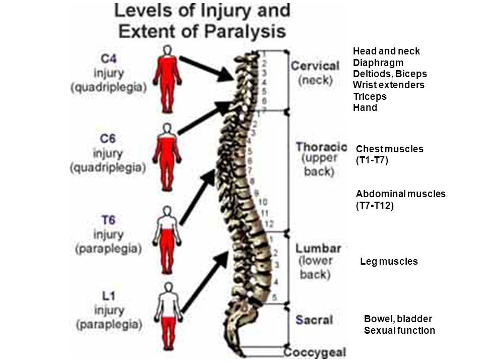 Spinal Cord Function After Injury Spinal Cord Structure In Relation