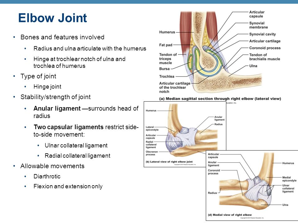 Joints Articulations Functions Of Joints Classifying Joints