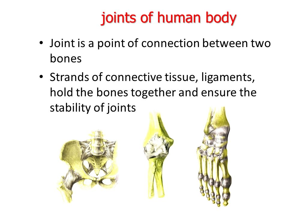 Human body bones and joints BY : Masoud mirmoezi. - ppt download