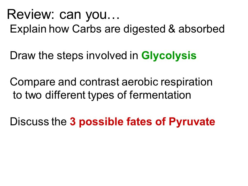 Review: can you… Explain how Carbs are digested & absorbed Draw the steps involved in Glycolysis Compare and contrast aerobic respiration to two different types of fermentation Discuss the 3 possible fates of Pyruvate
