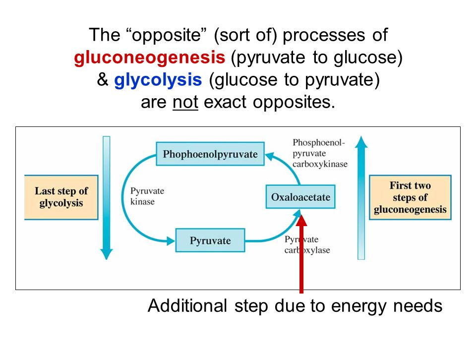 The opposite (sort of) processes of gluconeogenesis (pyruvate to glucose) & glycolysis (glucose to pyruvate) are not exact opposites.
