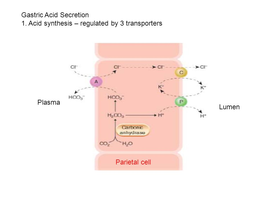 Gastric Acid Secretion 1. Acid synthesis – regulated by 3 transporters Lumen Plasma Parietal cell