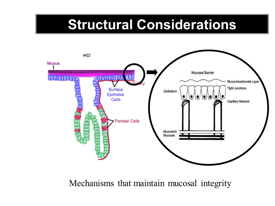 Structural Considerations Mechanisms that maintain mucosal integrity