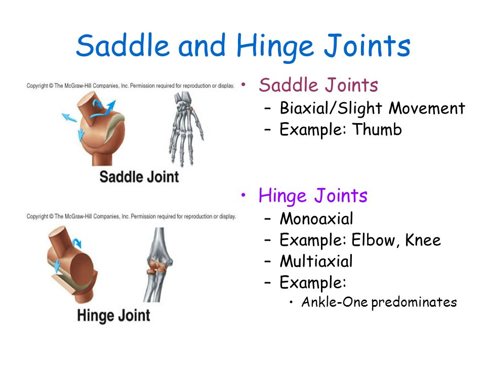 Chapter 8 Articulations And Movement Articulations Or Joints