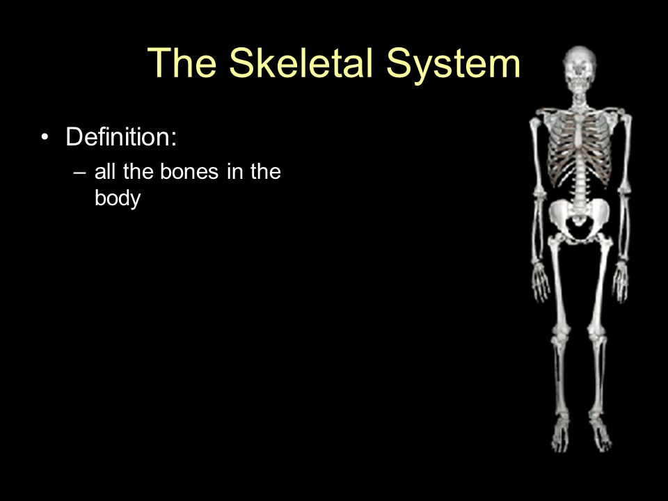 The Skeletal System Definition All The Bones In The Body Ppt