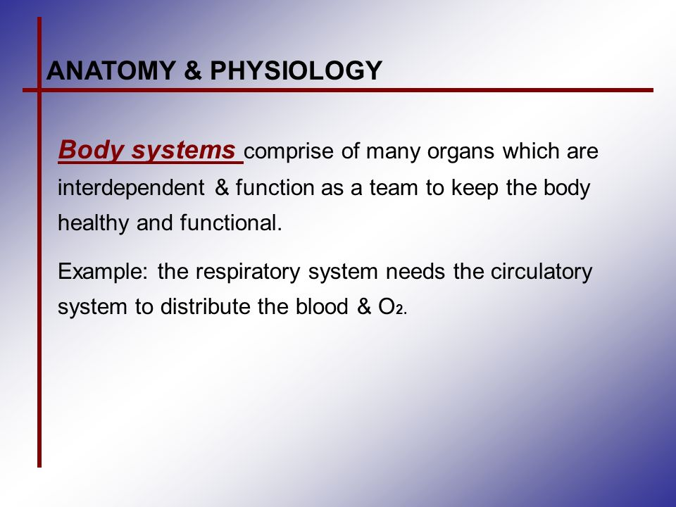ANATOMY & PHYSIOLOGY Definitions: Human anatomy deals with the ...