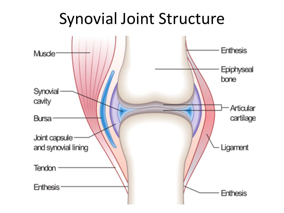 Joints Dr Anderson Gcit Joints Where Two Or More Bones Meet