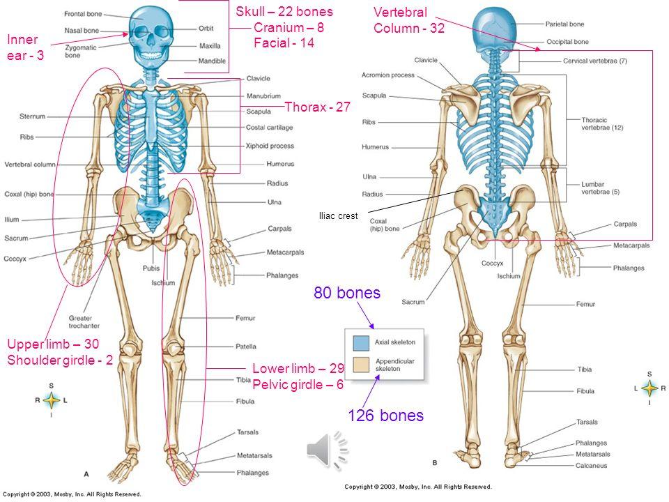 Baby Skeletal System Diagram House Wiring Diagram Symbols